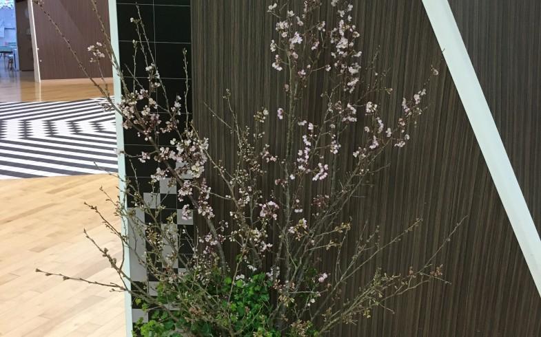 卒園式の桜の活け込み